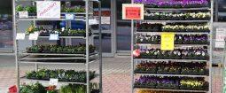 Blumen Werkmarkt 1